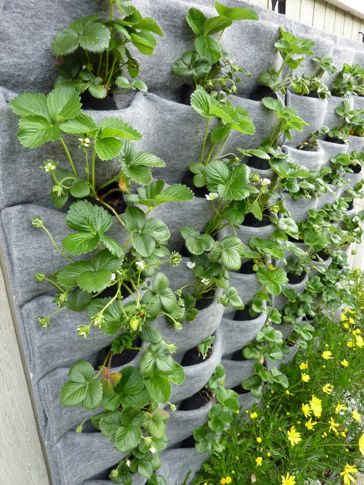 Plants On Walls Vertical Garden Blog Page 14