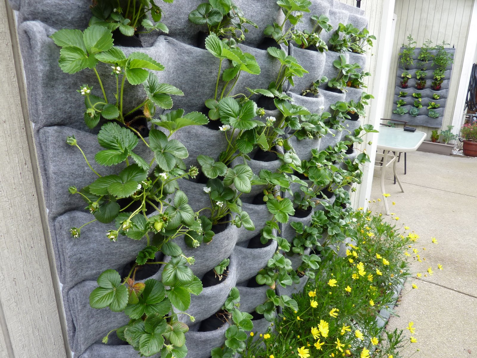 Plants on walls florafelt vertical gardens for Wall plants outdoor