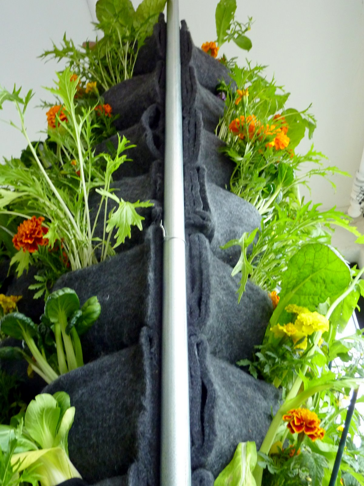 Aquaponic Vertical Vegetable Garden Plants On Walls