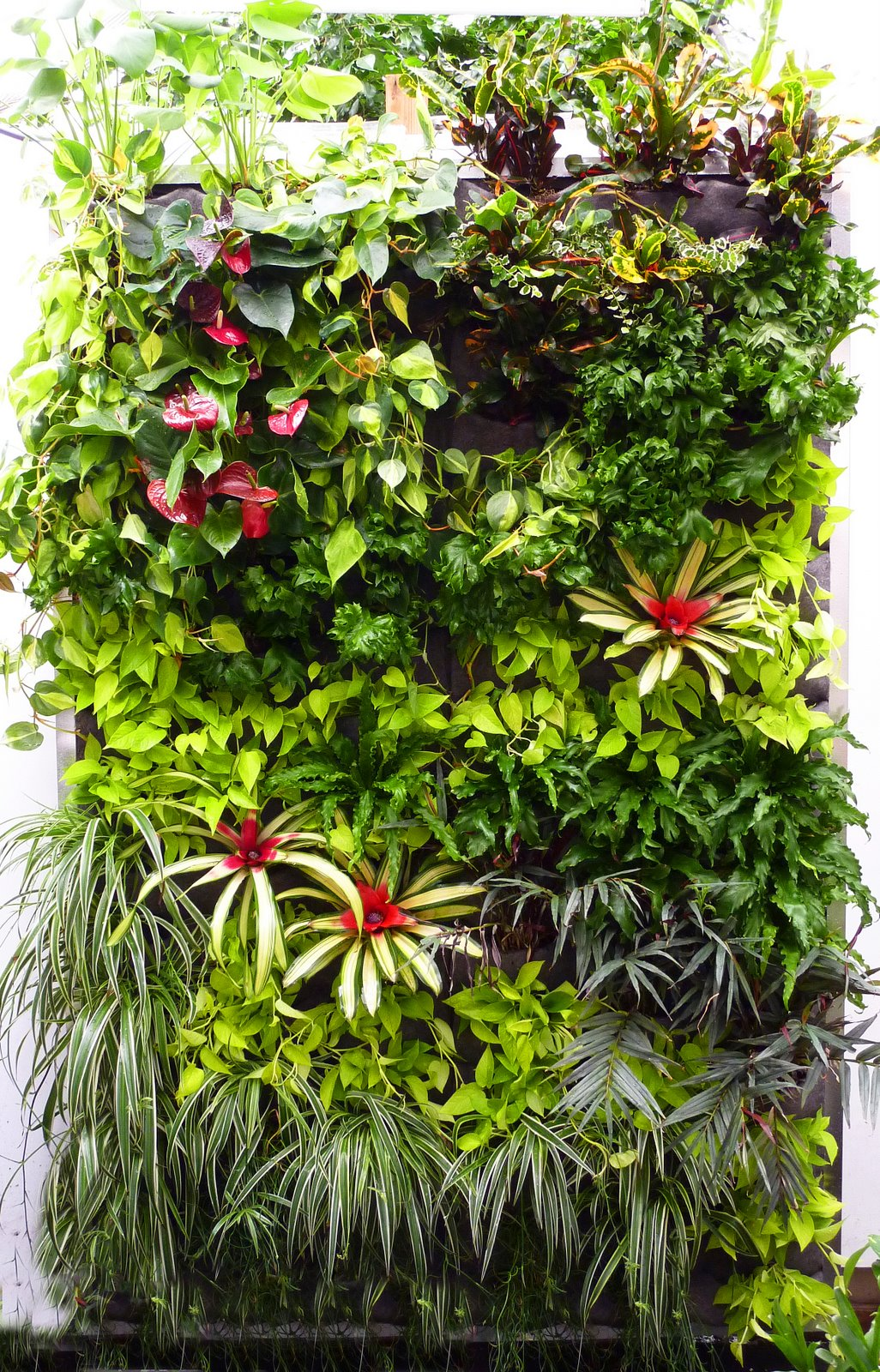 Full Tropical Walls At Sf Foliage Florafelt Vertical