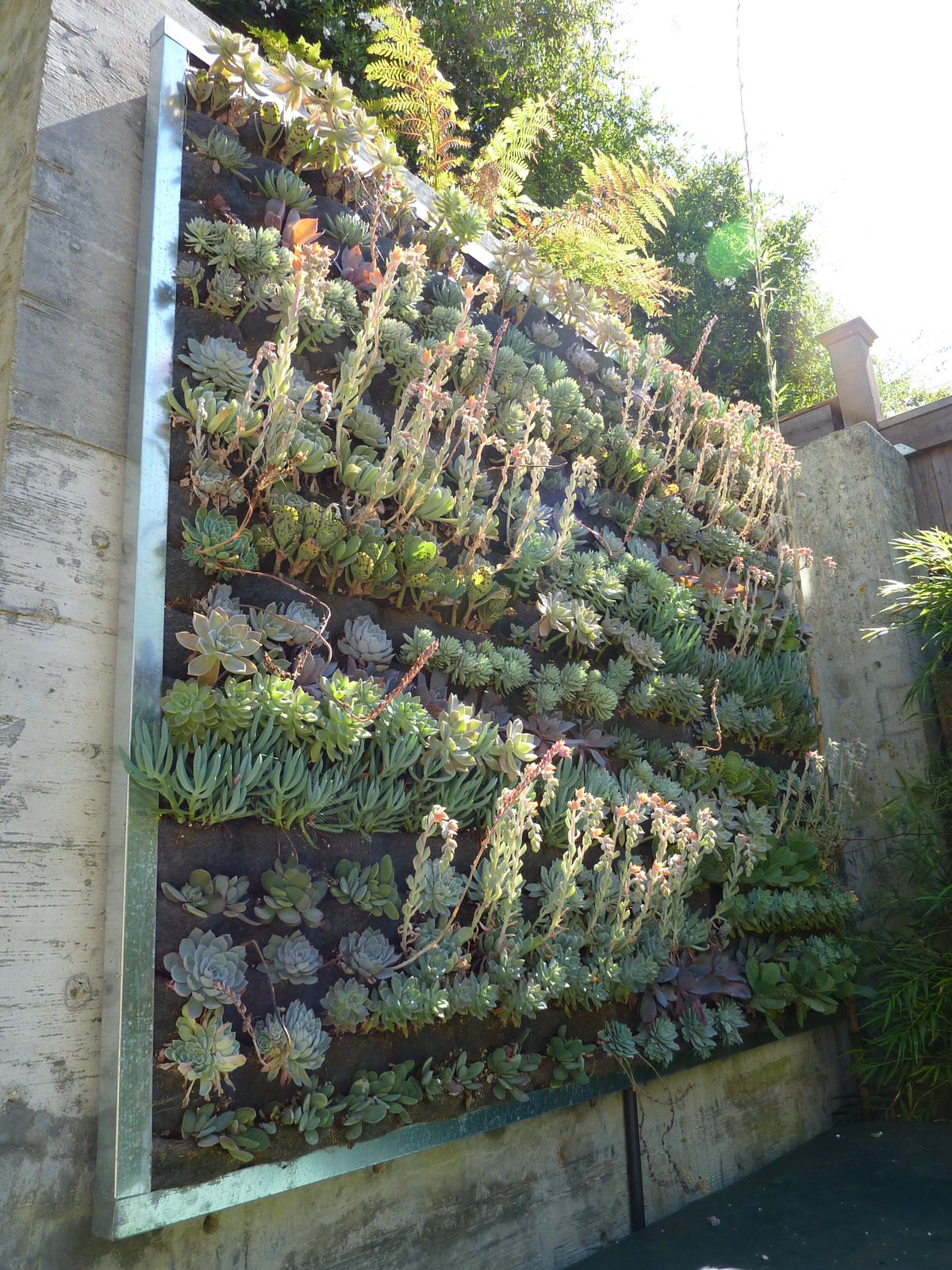 Superieur Large Succulent Wall   Planted · Large Succulent Wall Installation