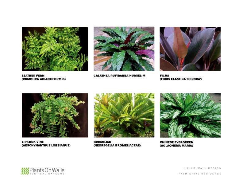 Chris Bribach, Plants On Walls. Computer Rendered Vertical Garden Design. Florafelt System.