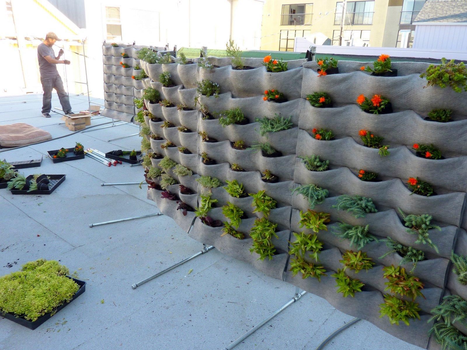 plants on walls vertical garden blog page 4. Black Bedroom Furniture Sets. Home Design Ideas