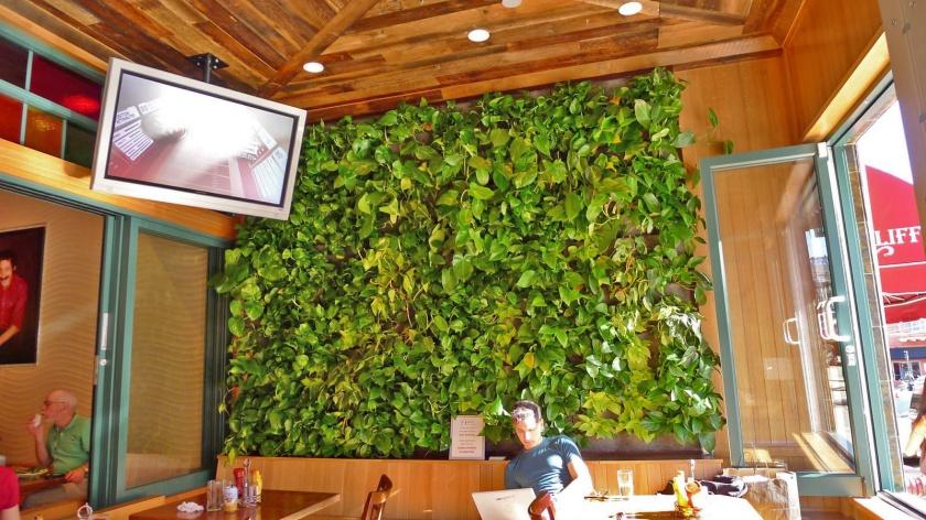 Chris Bribach, Plants On Walls. Fork Cafe, Florafelt Vertical Garden Planters.