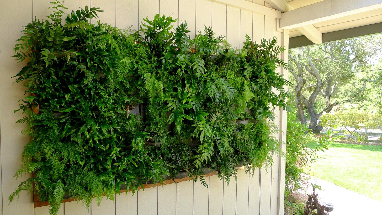Copper Framed Fern Wall Florafelt Vertical Garden Systems