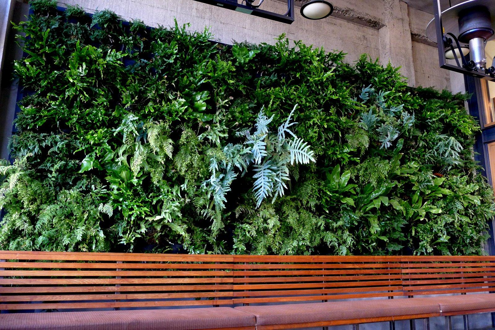 Urban wall gardening - Plantsonwalls Revisits Its Year Old Vertical Garden Fern Wall Installation For Urban Bistro In Burlingame