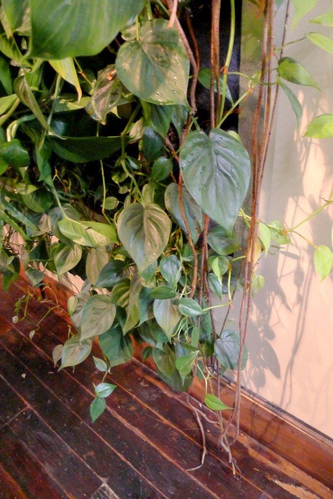 Chris-Bribach-Plants-On-Walls-Florafelt-Vertical-Garden-Population-Hair-Salaon-Jungle-1