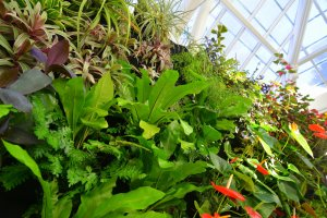 Florafelt Vertical Garden. San Francisco Conservatory of Flowers.