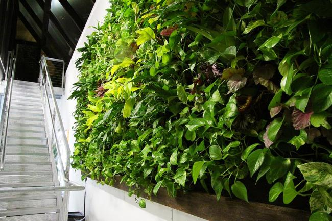 Florafelt Vertical Garden for the Entrepreneur Center in Lakeland, Florida.
