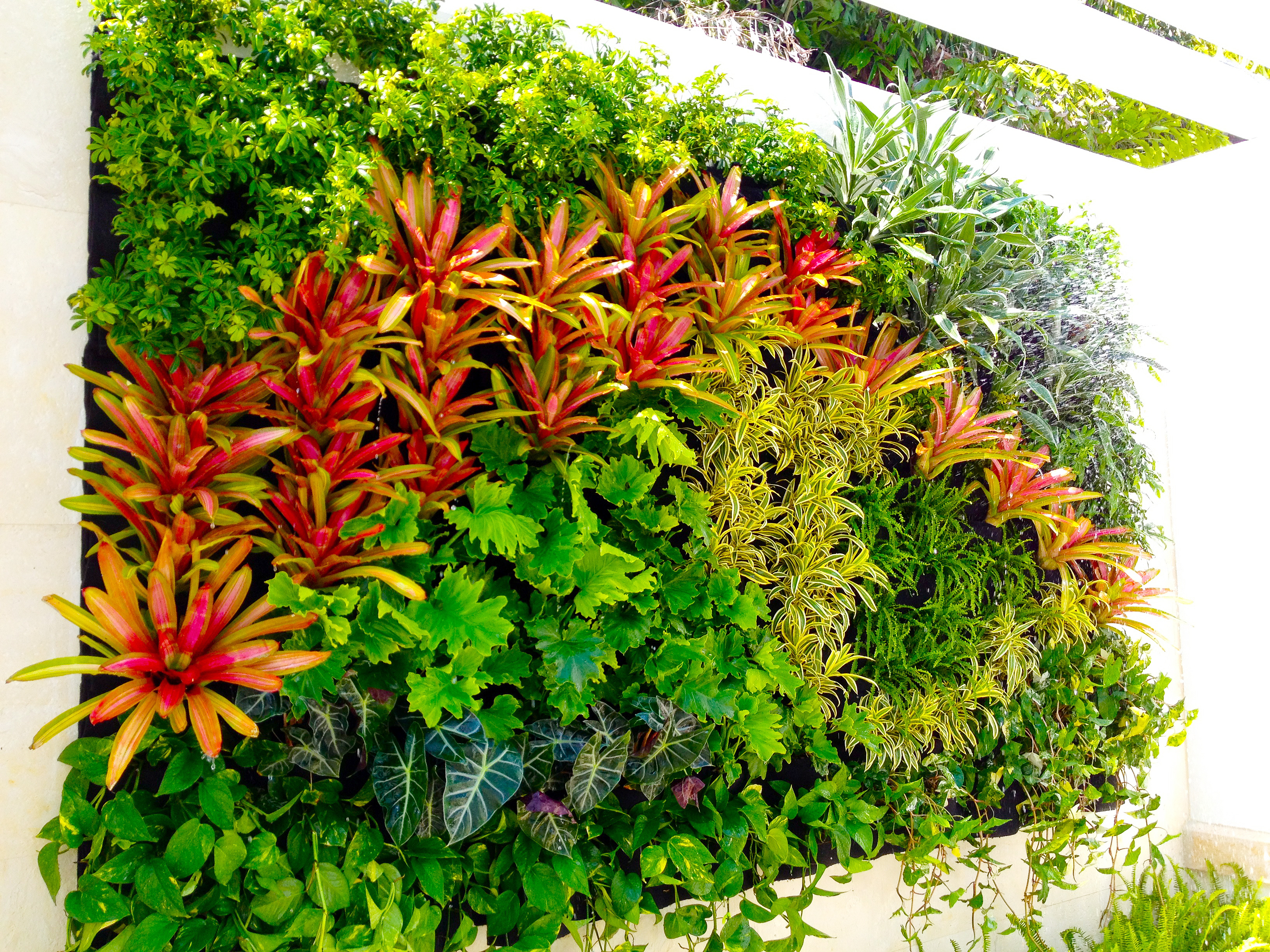 Plants on walls vertical garden blog for Tipos de jardines