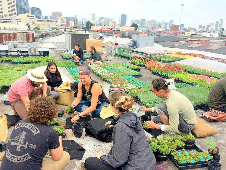 Root Wrapping Volunteers on a San Francisco Rooftop. Planted Design. Florafelt Pro System.