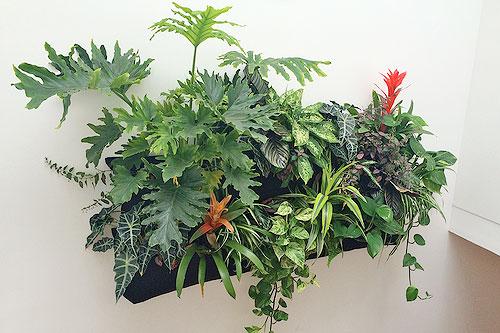 Amanda Goldberg. Planted Design.