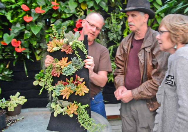 Florafelt Vertical Garden Simple Succulents Demo by Chris Bribach, Plants On Walls at the Conservatory of Flowers, San Francisco.