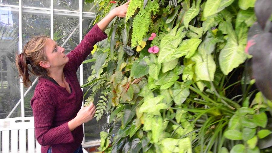 Steph Kantorski, Volunteer Horticulturist. Conservatory of Flowers, San Francisco. Florafelt System.