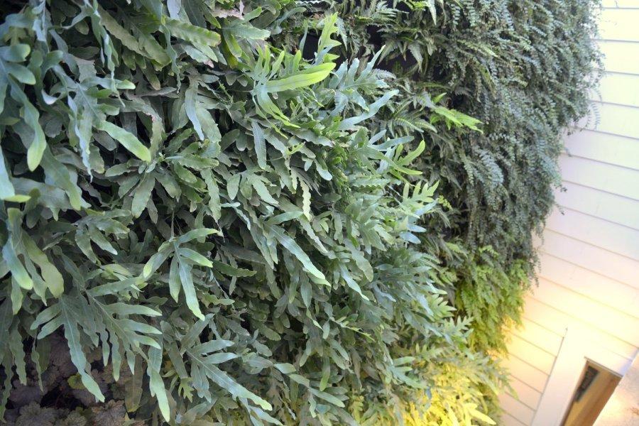 ae4b2-florafelt-vertical-garden-living-wall-belevedere-street-06-_cjb3492