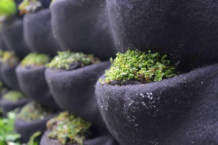 851e9-florafelt-vertical-garden-planter-baby-tears-closeup-cjb_2085-1200px